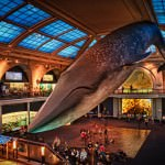 american-museum-of-natural-history-a-travelers-guide-to-the-biggest-museums-in-the-world