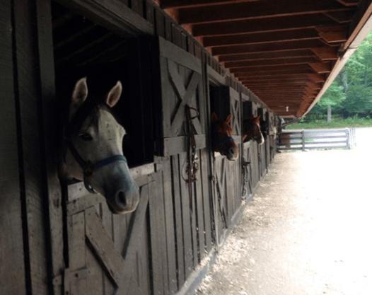 Skyland horse-stable.