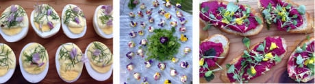 Deconstructed Deviled Eggs – Fleur de Chèvre covered in edible flowers – Beetroot Crostini with flowers and microgreens.