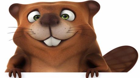 barry-beaver