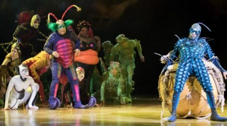 Members of the ensemble in 'OVO.' Photo courtesy of Cirque du Soleil.